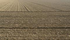 Stock Photo of plowed acre