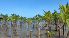 Mangroves on the shore - stock footage