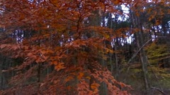 Mammoth Cave National Park Fall Trees Handheld 1 HD Stock Footage