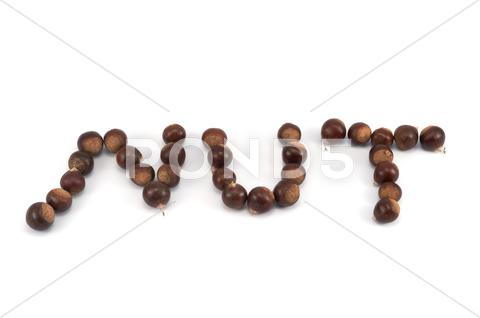 Stock photo of chestnut nut