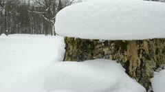 Tree stump cover melt winter snow spring water drop fall down Stock Footage