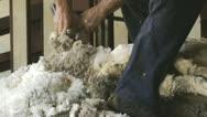 Close-up shot of sheep shearing Stock Footage