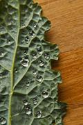 Water droplets on kale leaf Stock Photos