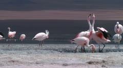 Flamingo5 Stock Footage