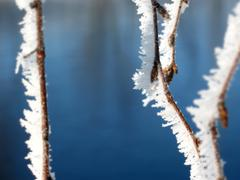 Winter detail of  hoar frost on birch tree branches Stock Photos