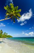 White Sand and Palm Tree Stock Photos