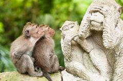 long-tailed macaques - stock photo