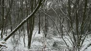 Trees forest with light snow Stock Footage
