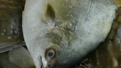 Delicious Croaker Pomfret fish & crab,within dial plate.fisheries ice frozen. Stock Footage
