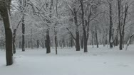 Snowing, Snow Fall, Motion Winter Scene, Winter View in the Forest Stock Footage
