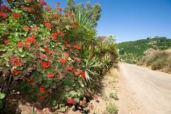 Roadside flowers Stock Photos