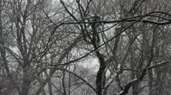 Winter background Stock Footage