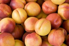 lots of fresh nectarines - stock photo