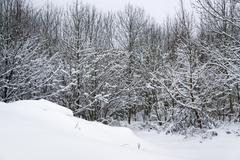 Stock Photo of snowy forest detail