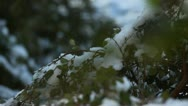 Snow melts Stock Footage