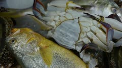 Delicious crab & Croaker Pomfret fish,within dial plate.fisheries ice frozen. Stock Footage