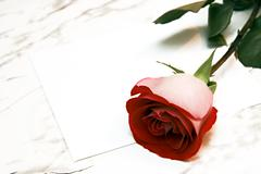 Stock Photo of red rose and the letter