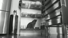 Black & White, Queensland interior 8 Stock Footage