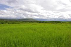Stock Photo of green summer field and hills