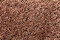 Background of fur. macro Stock Photos