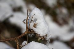 snow on tree branches. macro - stock photo