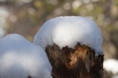 snow on a tree stump - stock photo