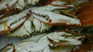 Delicious crab within dial plate.fisheries ice frozen. Stock Footage
