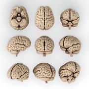 Brain Stock Illustration