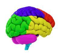 colored brain - stock illustration