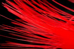 red feather on a black background. macro - stock photo
