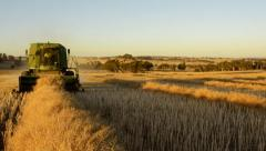 Harvesting a Canola Crop at Dusk on an Australian Farm Stock Footage