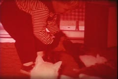 1960's archive-toddler and kittens 2 - stock footage