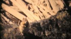 Lady Feeding Chipmunks In Banff-1958 Vintage 8mm film Stock Footage