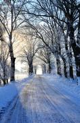 hoar frost in the alley - stock photo