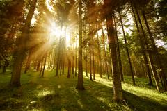 Forest sunny Stock Photos