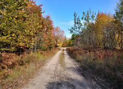 Rural road and autumn forest Stock Photos