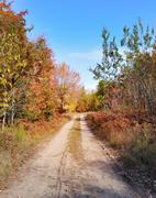 Stock Photo of rural road and autumn forest