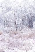 Stock Photo of winter background
