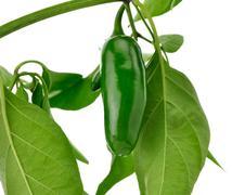 hot green pepper - stock photo