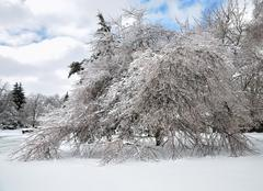 after ice storm - stock photo