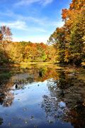 autumn forest by the lake - stock photo
