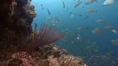 Static deep coral reef and silver fish Stock Footage