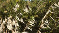 Wild Plants Stock Footage