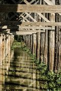 The dry season cultivation of teak wood bridge u-bein bridge, amarapura, myan Stock Photos