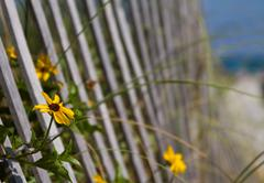 Golden flowers by fence Stock Photos