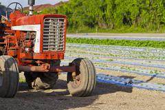 Farm tractor - old vintage Stock Photos