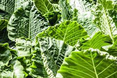 Big green leaf Stock Photos