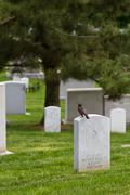 Graveyard with bird on tombstone Stock Photos
