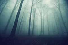 Creepy forest path Stock Photos