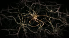 Nervous System Neuron Cells Stock Footage